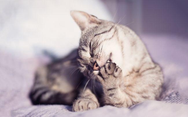 Разрыв связок у кошки: разбираемся в видах и причинах