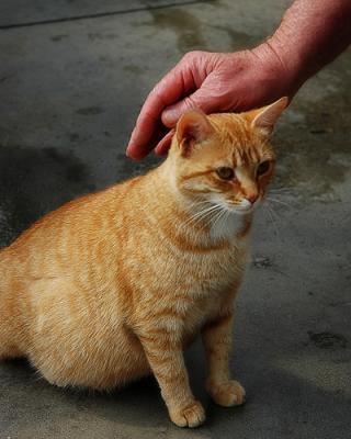 Стопсекс для кошек