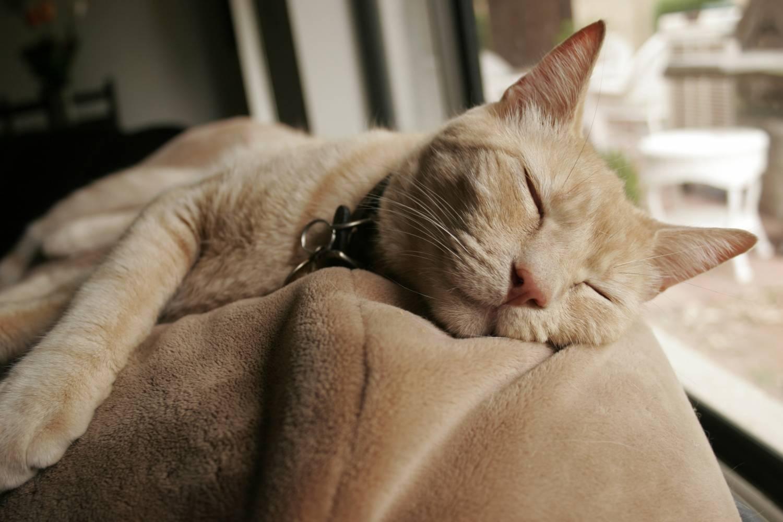 Как сделать так чтобы кошка засыпала