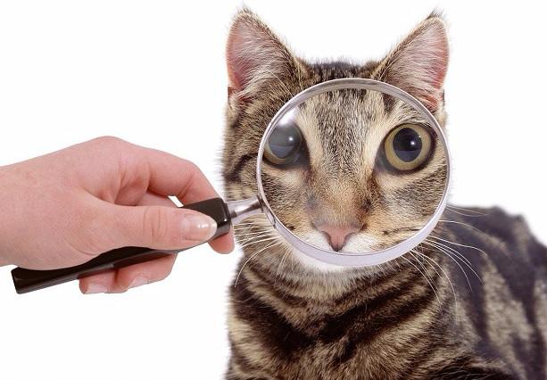 Гнойное воспаление суставов кошкам спорт питание для суставов