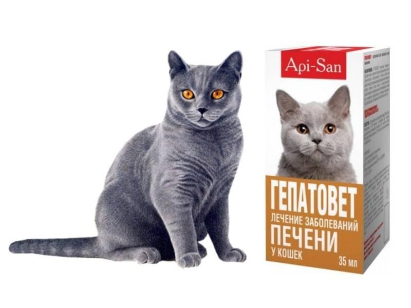 Гепатовет для кошек.