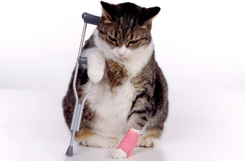 Повреждение сустава у котят спортивное питание для суставов и связок