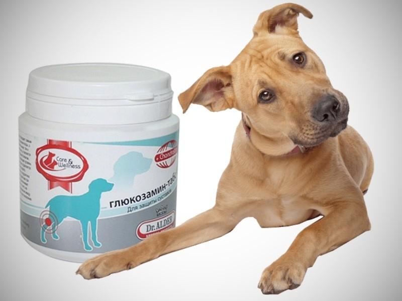 Лекарство для суставов для пожилых собак болезни суставов в детском возрасте