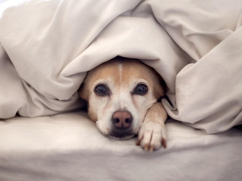 Обезболивающие средства для суставов у собак травмы коленного сустава при ушибе