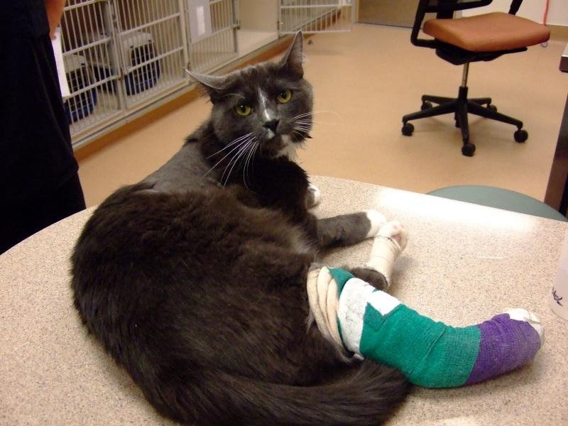 Перелом коленного сустава у кошки сколько стоит операция по сшиванию связок плечевого сустава