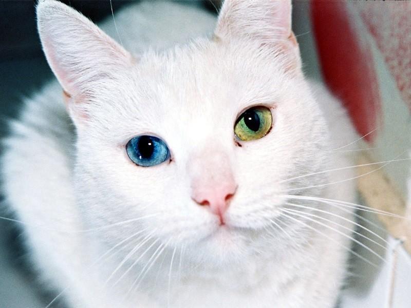 Как сделать глаза как у кошки 682