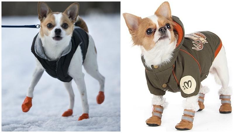 8bb5b72fa1b7 Важно! В зимнюю погоду, собака не теряет свое тепло через лапы, поэтому  актуальность меховых начесов сомнительна. Обувь должна быть удобной и  сидеть на лапе ...