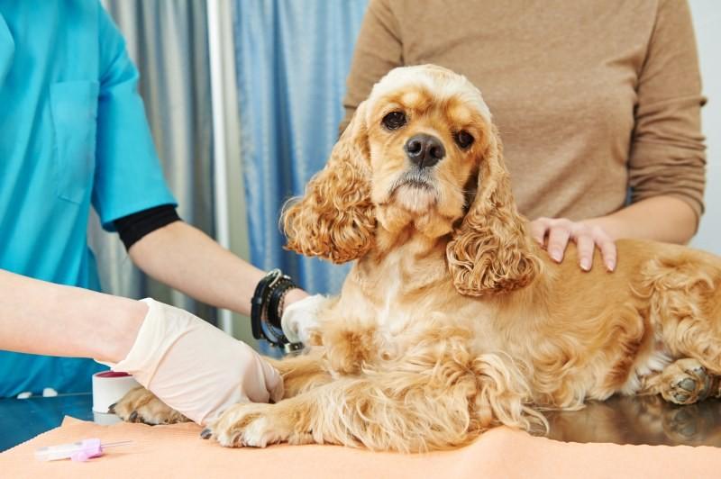 У собаки родовая травма локтевых суставов упрощенная йога для больных суставов