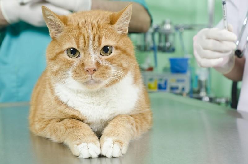 У котенка вывих коленного сустава что делать опухоль на локтевом суставе как лечить