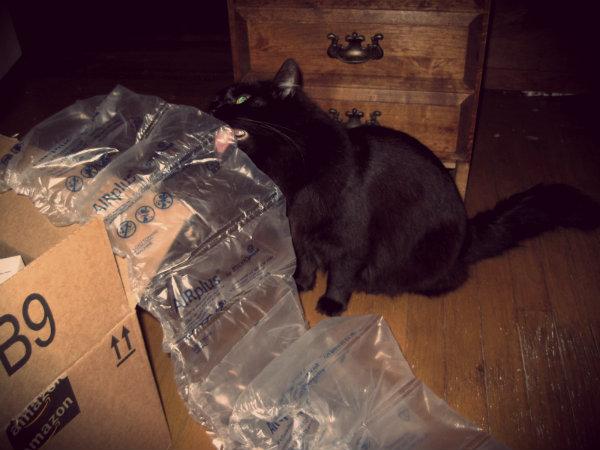 Почему кот лижет пакет