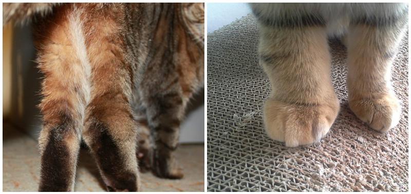 Заболевания суставов у котят институт костно суставного туберкулёза