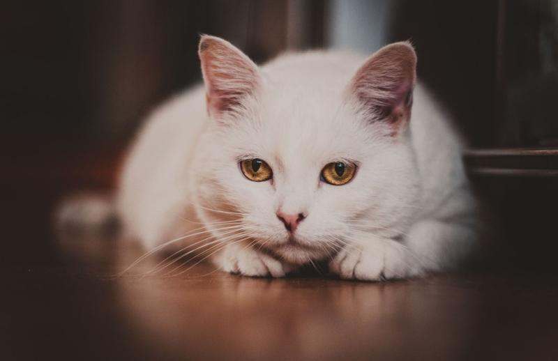 Рвота вязкой пенистой слюной у котенка