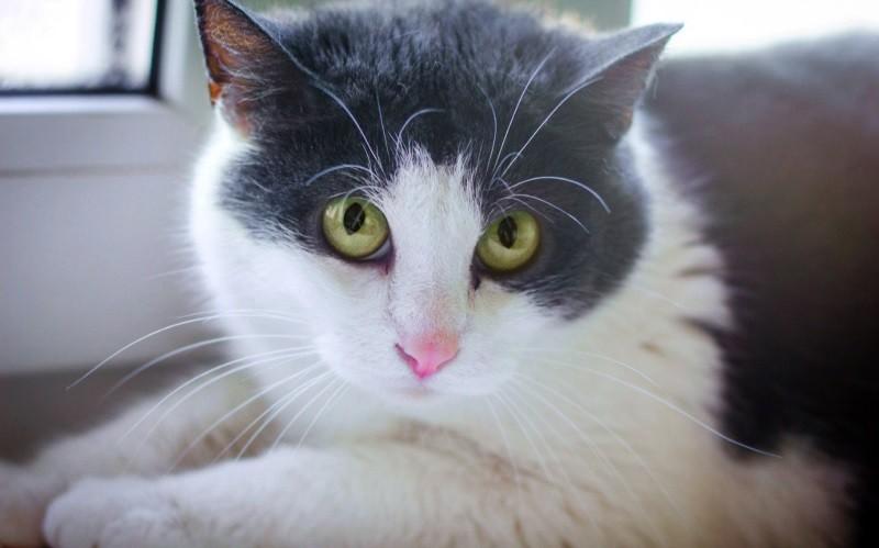 Дисплазия тазобедренных суставов у кошек причины бальзамы дикуля для суставов
