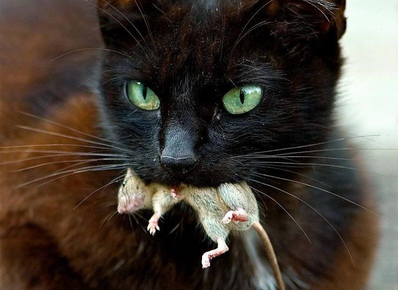 Что поможет коту от запора в домашних условиях 605
