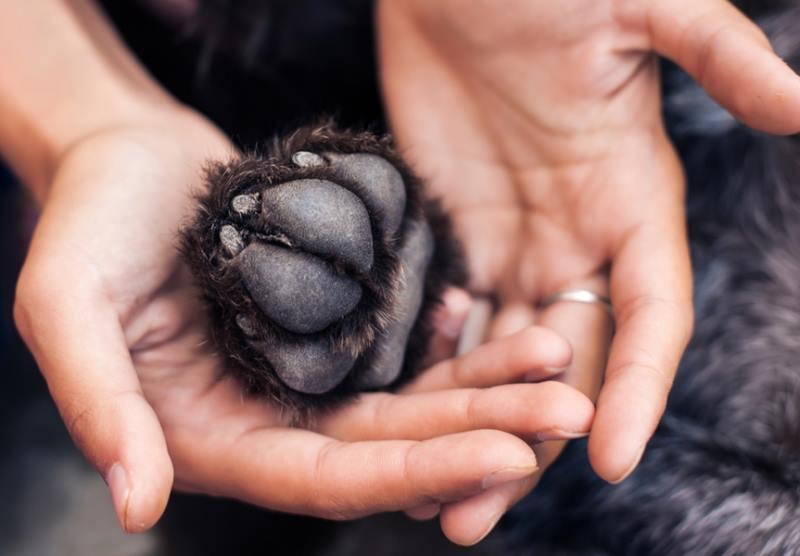 Грибковые заболевания на суставах у собак лечение болезни суставов кур бройлеров