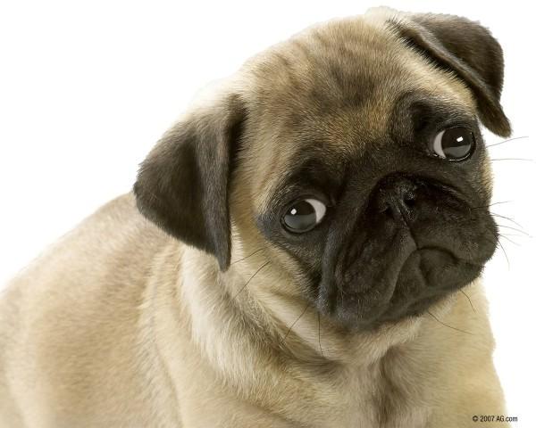 как можно проверить здорова ди собака