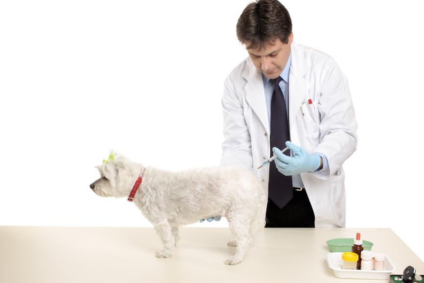 Как колоть болденон собаке джинтропин сколько стоит в китае