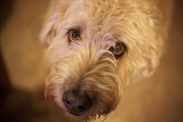 Как снять воспаление сустава собакам после приема каких трав могут заболеть суставы