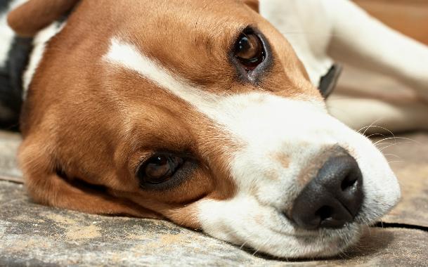 Собака выбила сустав что делать маленькие зеленые китайские таблетки от суставов