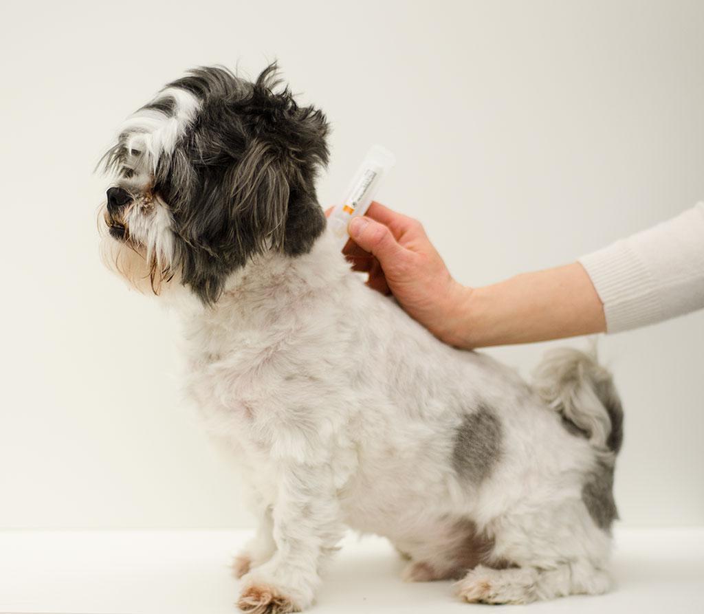 Чесоточный клещ у собак: фото, симптомы и лечение