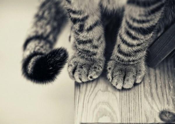 Повреждение сустава у кошек могут ли болеть суставы при гепатите в