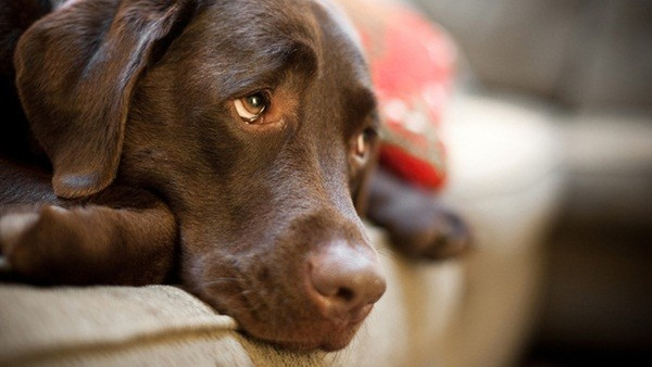 Операция по саркоме плечевого сустава у собак операция по змене тазобедренного сустава
