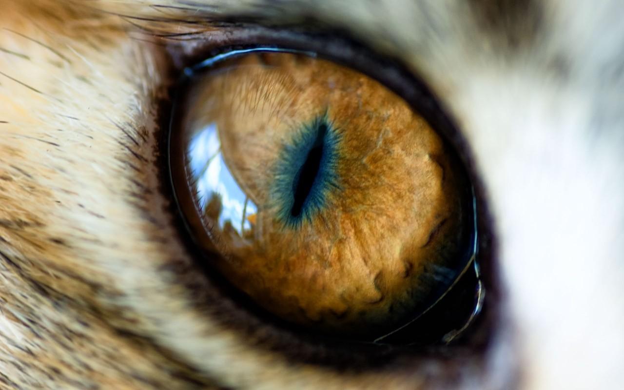 Картинки по запросу глаз кота