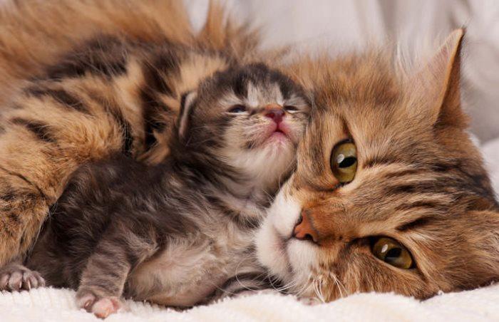 У кошки нет молока после родов