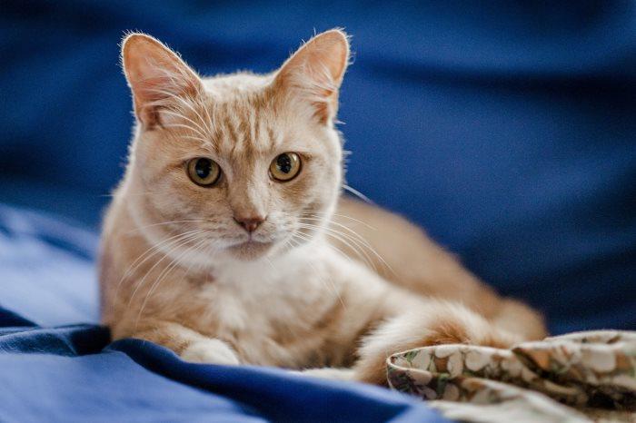Кошка после стерилизации не ест и не пьет что делать