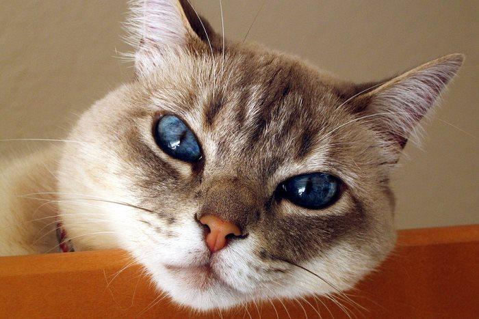 Понос у кошки, причины и лечение: чем лечить животное в домашних условиях, есть у него жидкий стул?
