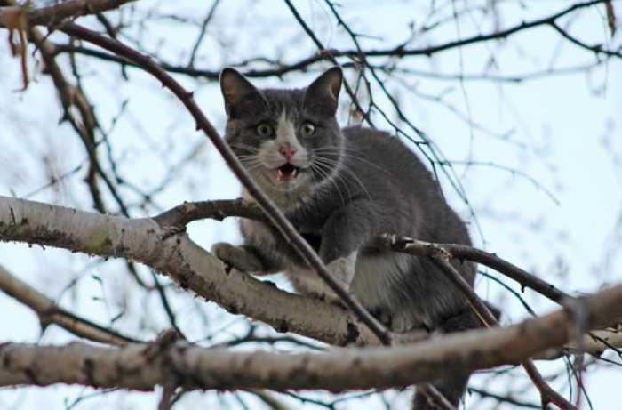Как кошку снять с дерева