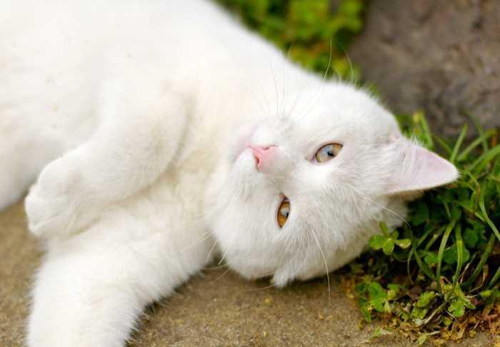 Пробуем определить кастрированный кот или нет на что обратить внимание при осмотре