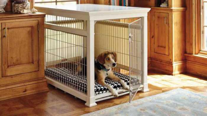 Как отучить щенка или собаку грызть вещи, мебель, обои, провода, обувь?..