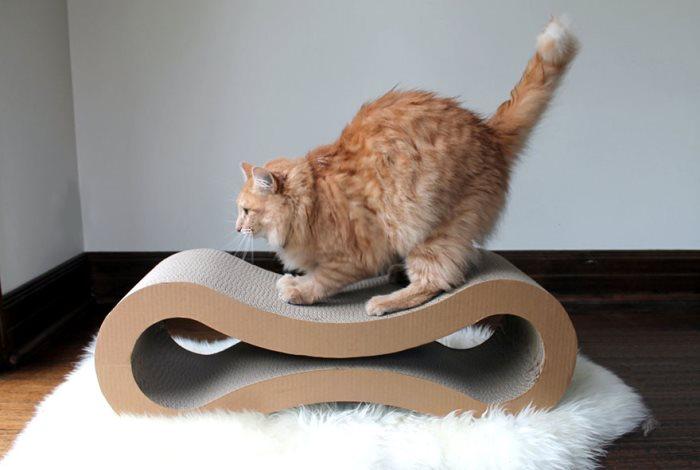Как кошку приучить к когтеточке
