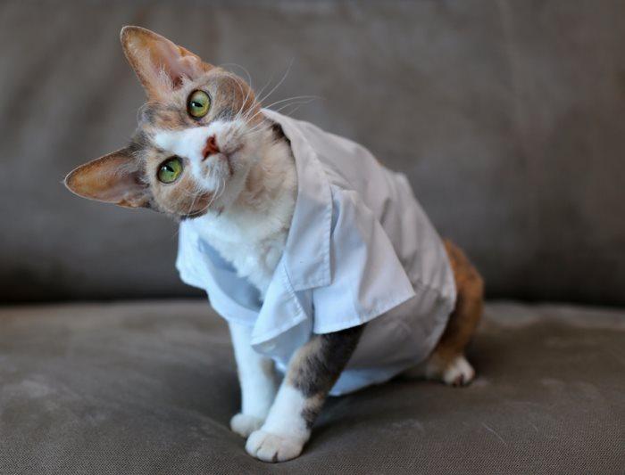 Грыжа после операции у кошки что делать