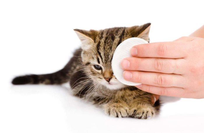 Почему у котнка красные глаза