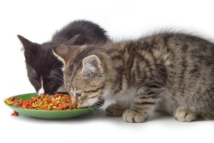 Как приучить котенка есть сухой корм