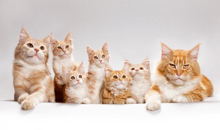 Сонник кошка с котятами для незамужней
