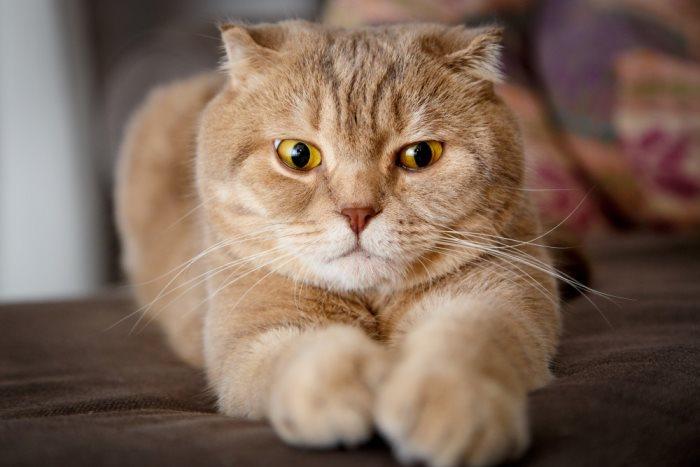 Стерилизация кошек когда необходимо проводить и какие последствия ожидать
