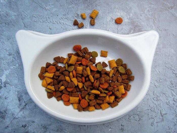 Как правильно размачивать сухой корм для кошек Можно ли размачивать сухой корм для кошек