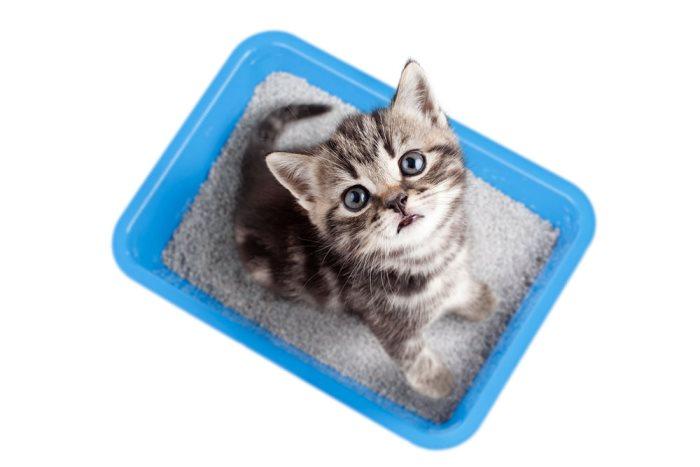 как приучать котят к лотку с рождения