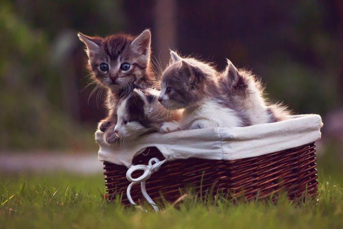 Во сне видеть котят маленьких при беременности thumbnail