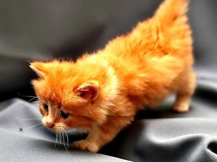 Во сне видеть котят маленьких при беременности