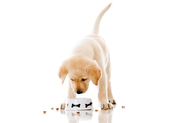 Перевод щенка с натуралки на сухой корм