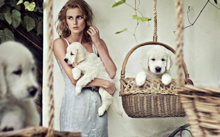 К чему снятся собаки женщине?. К чему приснились собаки? Что означает сон для женщины. Собаки во сне. Что означает сновидение для женщины?
