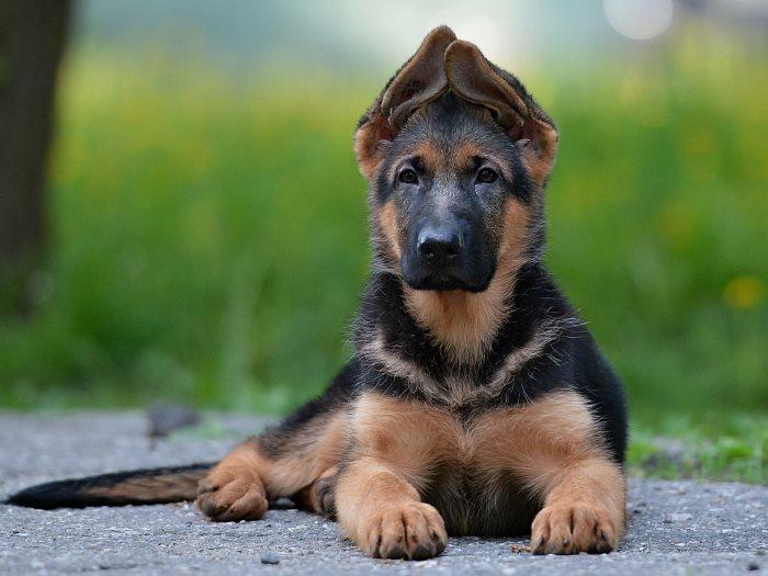 Дрессировка собак в домашних