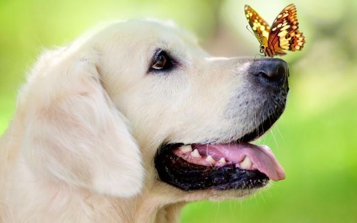 К чему женщине или девушке снятся собаки толкование по сонникам