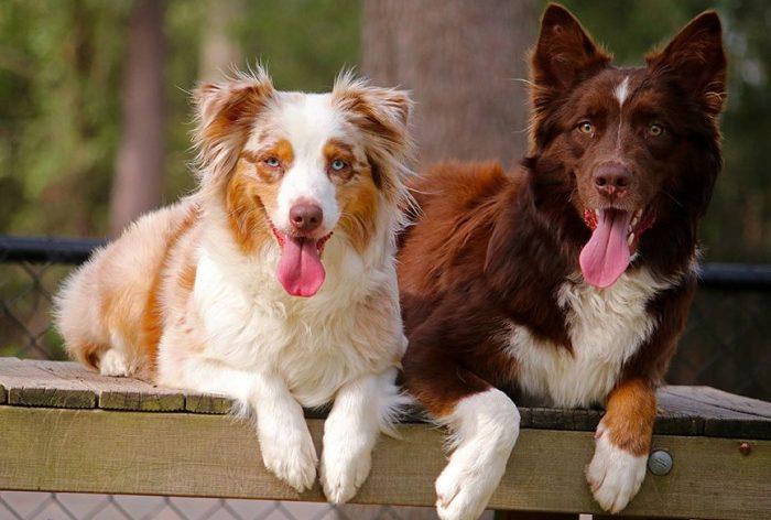 Почему после спаривания собаки слипаются