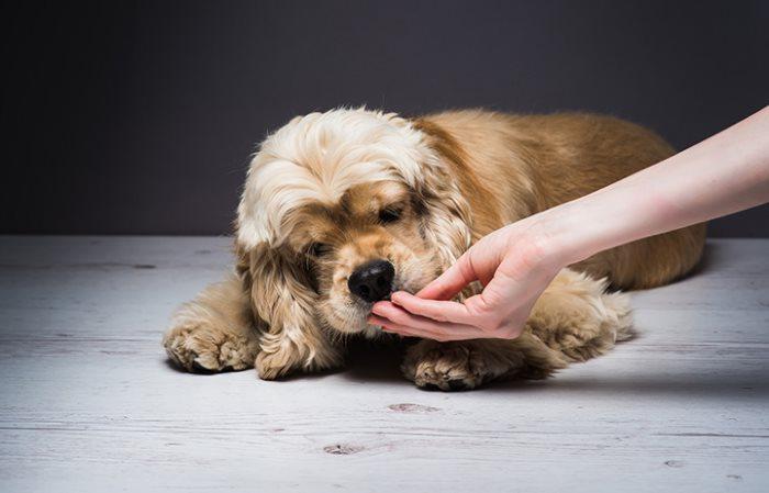 Перевод собаки на другой корм