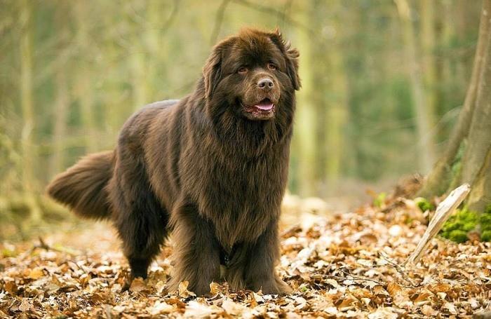 Сонник приснилась большая собака